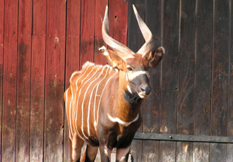 parken zoo djurpark eskilstuna